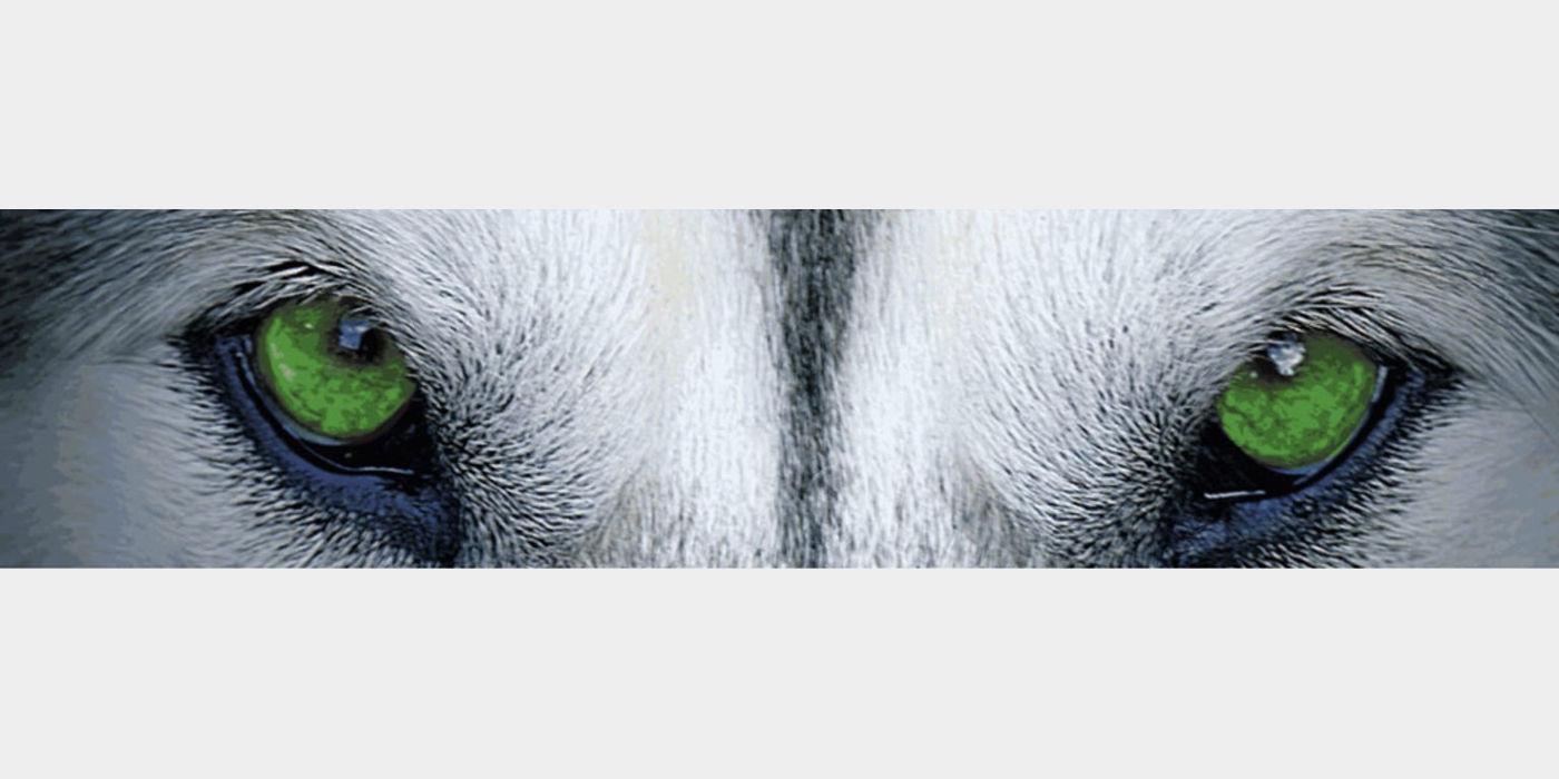lobo Augen